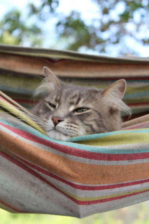 Cat nappin'!