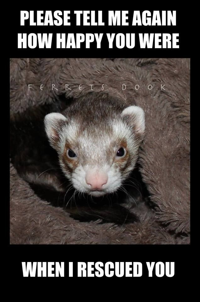 Ferrets Cute Animals Ferret Funny For Kids Forever Awesome