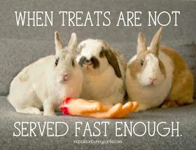Rabbit Ramblings Funny Bunny Memes Funny Rabbit Funny Bunnies Pet Bunny