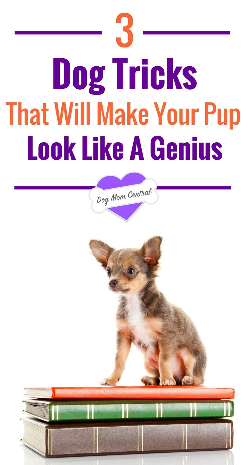 3 Tricks That Will Make Your Dog Look Like A Genius Articles
