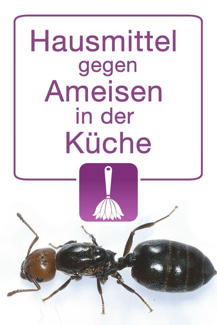 Hausmittel gegen Ameisen in der Küche | Oder, Und and Kueche