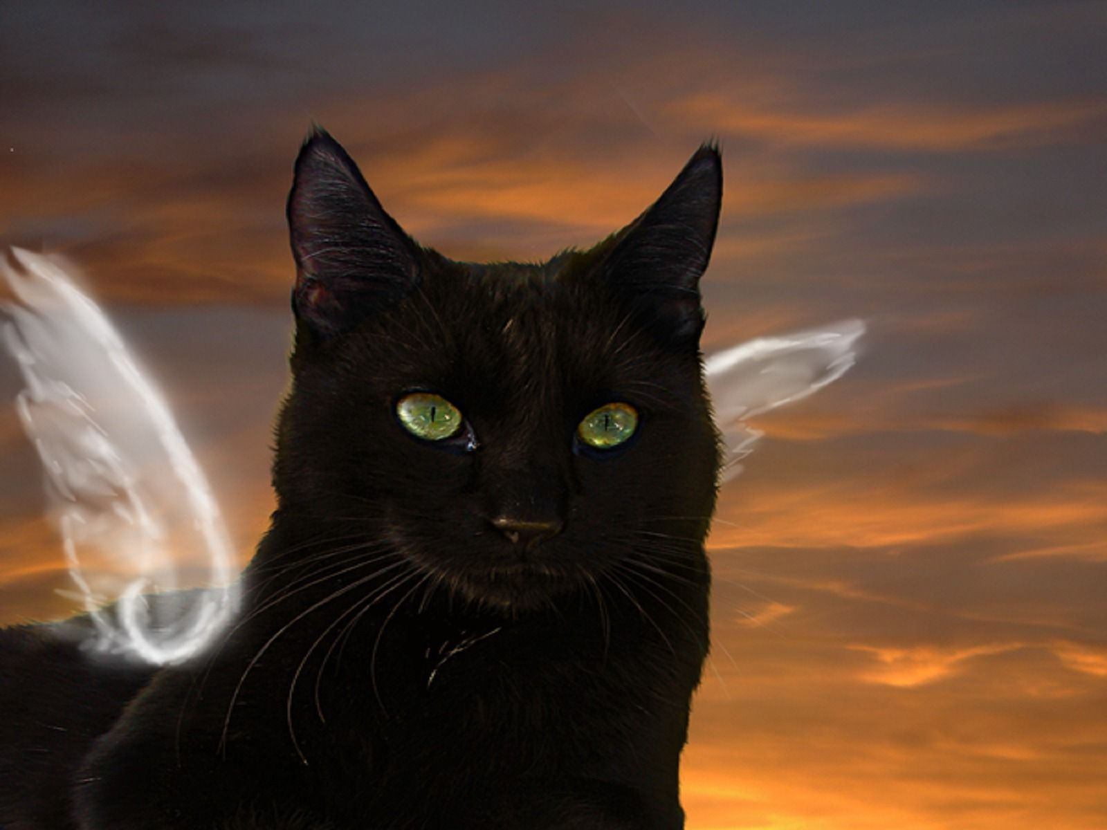 Картинки черных ангелов кошек при папиллярной