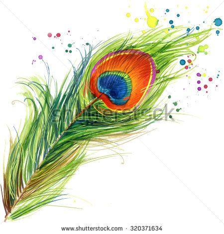 Peacock 库存照片、图片和图画 | Shutterstock