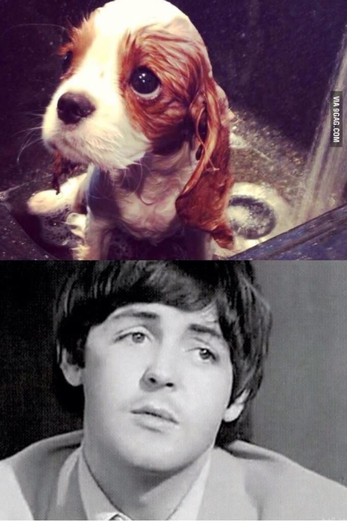The Beatles Puppy Dog Eyes Times 2