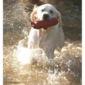 Top Golden Retriever Puppies For Sale In Singapore Reviews Labrador Puppy Puppies For Sale Puppies
