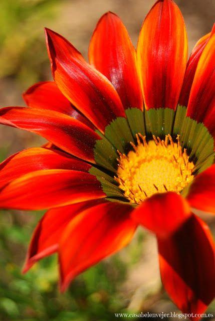 Casabelén Blog: LA FOTO DE LA SEMANA... APABULLANTE COLORIDO