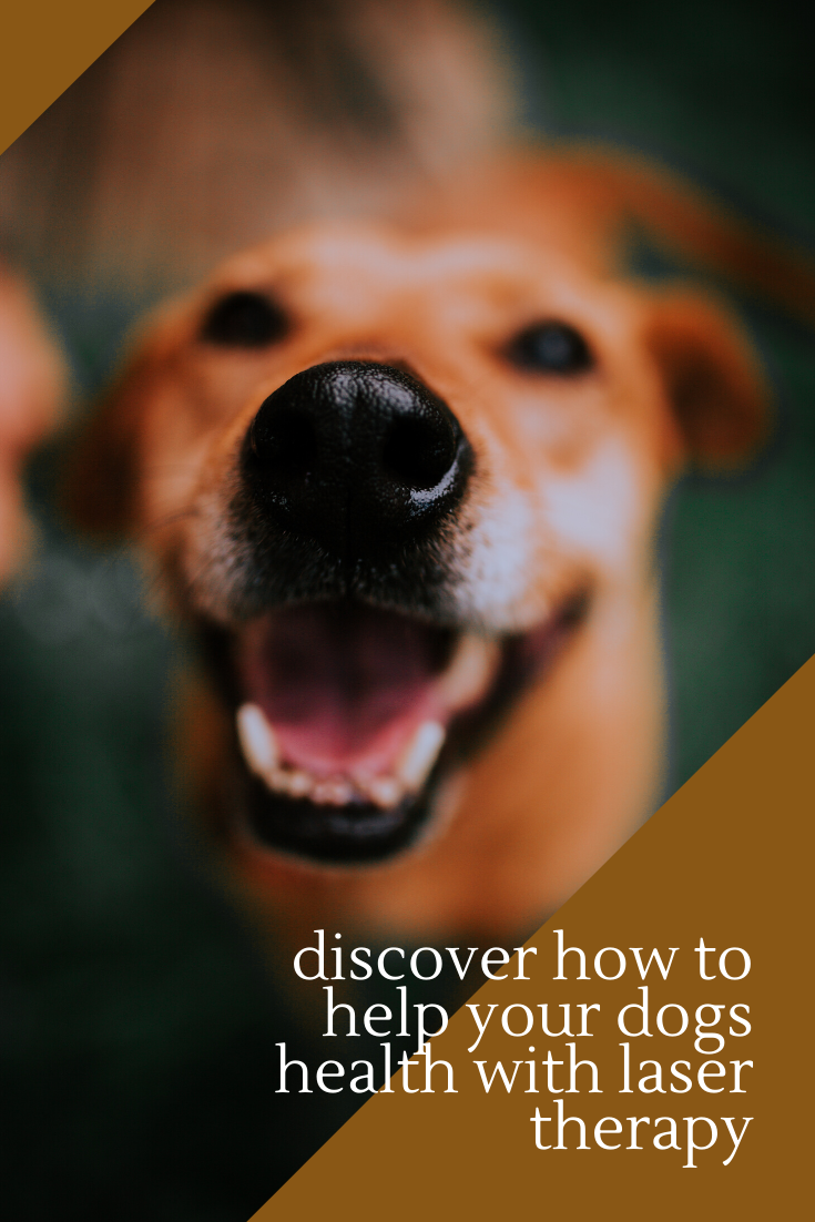 dogs veterinary doghealth Dog health, Laser therapy