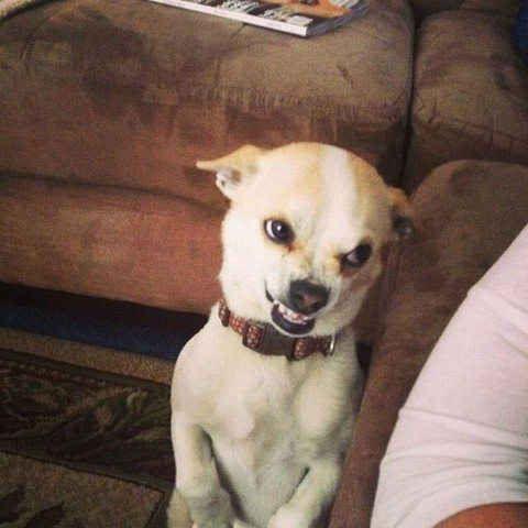 This dog says something like,