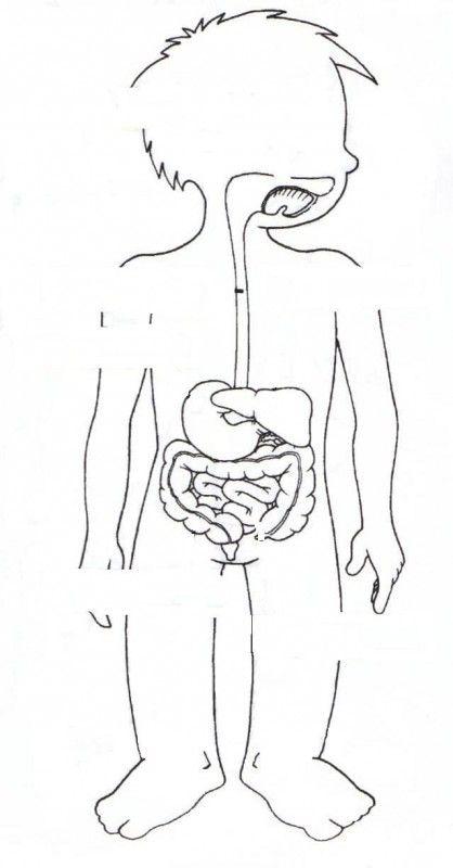 Dibujos del aparato digestivo para pintar - Imagui | cuerpo cuento ...