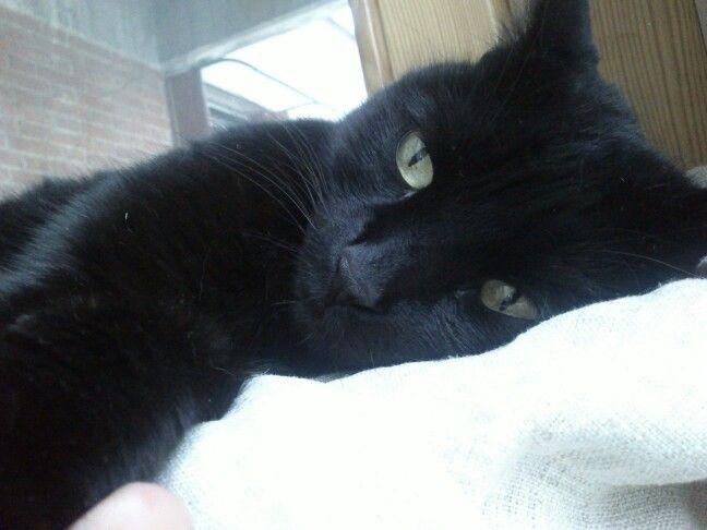 My blak kitty