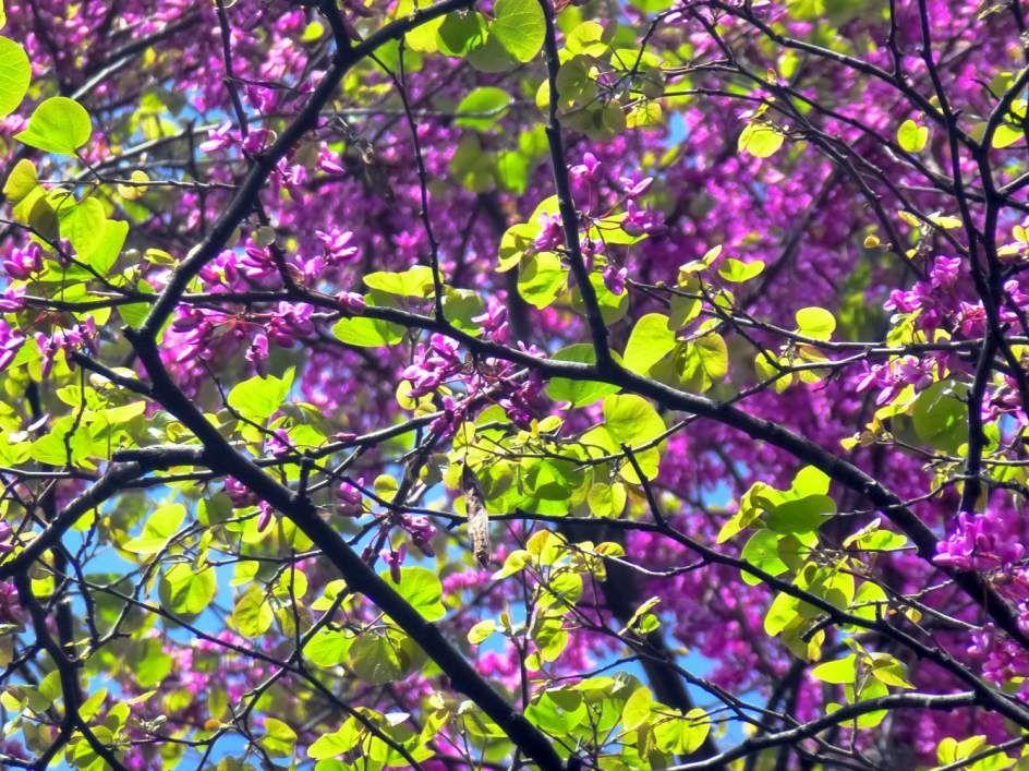 Florece la primavera en el Retiro de Madrid. Foto: Ricardo Cordero. [Envía tu foto por correo mailto: zona20@20minutos.es o por twitter #Primavera20m]