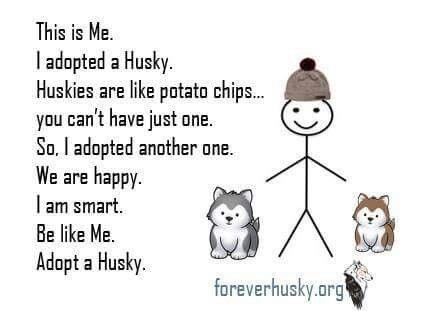 Pin By Lynn Williams On Husky Humor Husky Funny A Husky Dog Quotes