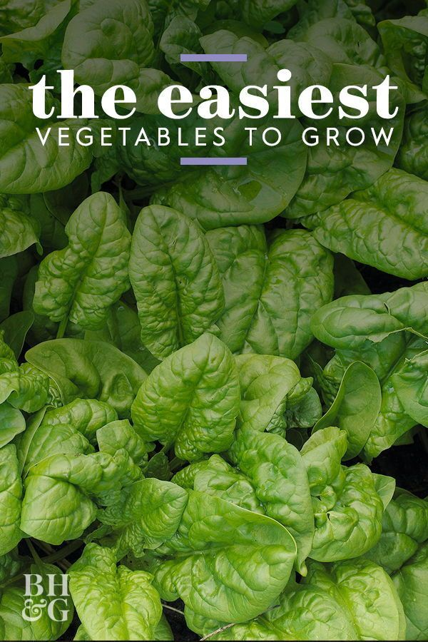 10 Quick And Easy To Grow Vegetables Your Garden Needs 640 x 480