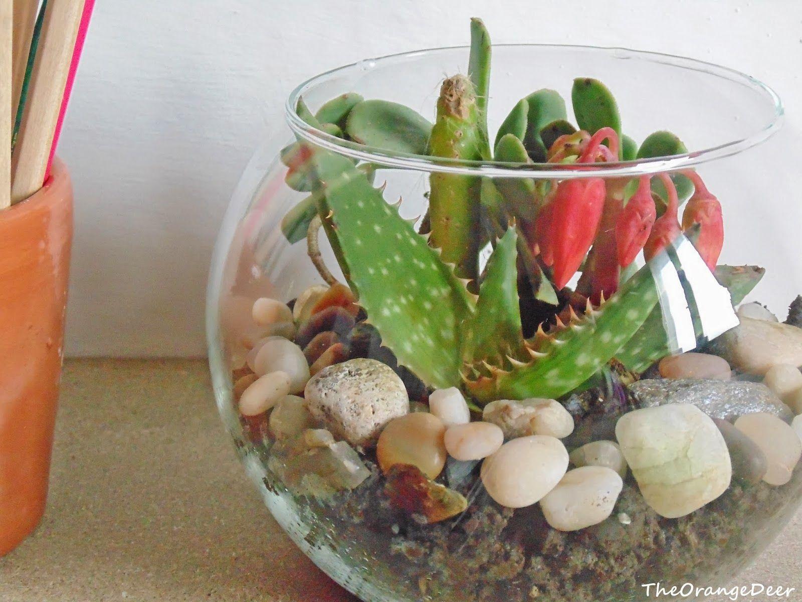 Composizioni Piante Grasse Fai Da Te : Composizioni di piante cerca con google e