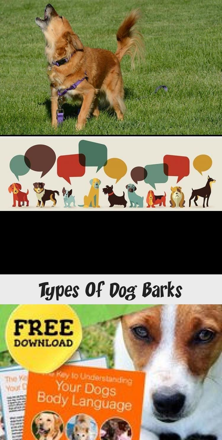 Types Of Dog Barks In 2020 Dog Barking Dog Body Language Dogs