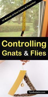 Discover the best methods of gnat control and prevention with homemade natural r...   - Pest control treatment - #Control #Discover #Gnat #Homemade #Methods #Natural #Pest #Prevention #treatment #gnats Discover the best methods of gnat control and prevention with homemade natural r...   - Pest control treatment - #Control #Discover #Gnat #Homemade #Methods #Natural #Pest #Prevention #treatment #gnats Discover the best methods of gnat control and prevention with homemade natural r...   - Pest con #gnats