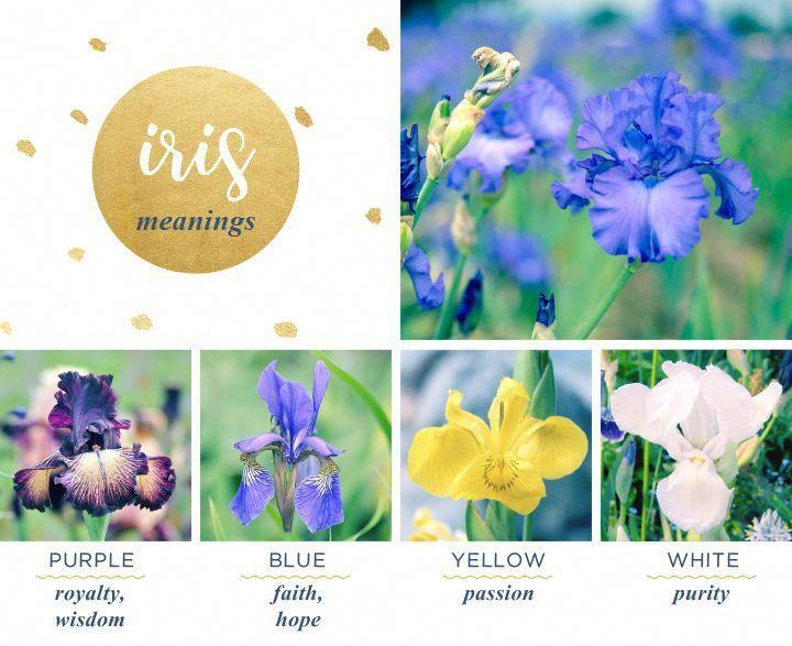 Iris Meaning And Symbolism Ftd Weddingflowersymbolism White
