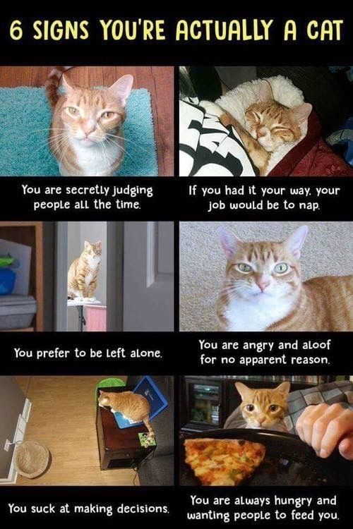 From Now On A Am A Cat Please Feed Me Cats Sleeping Funny Funny Cat Memes Cats