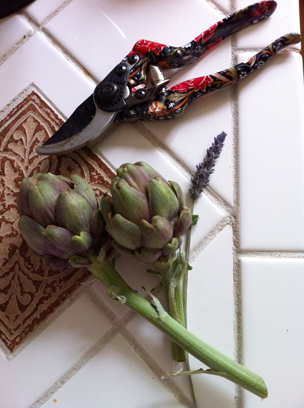 Bounty from the SF garden