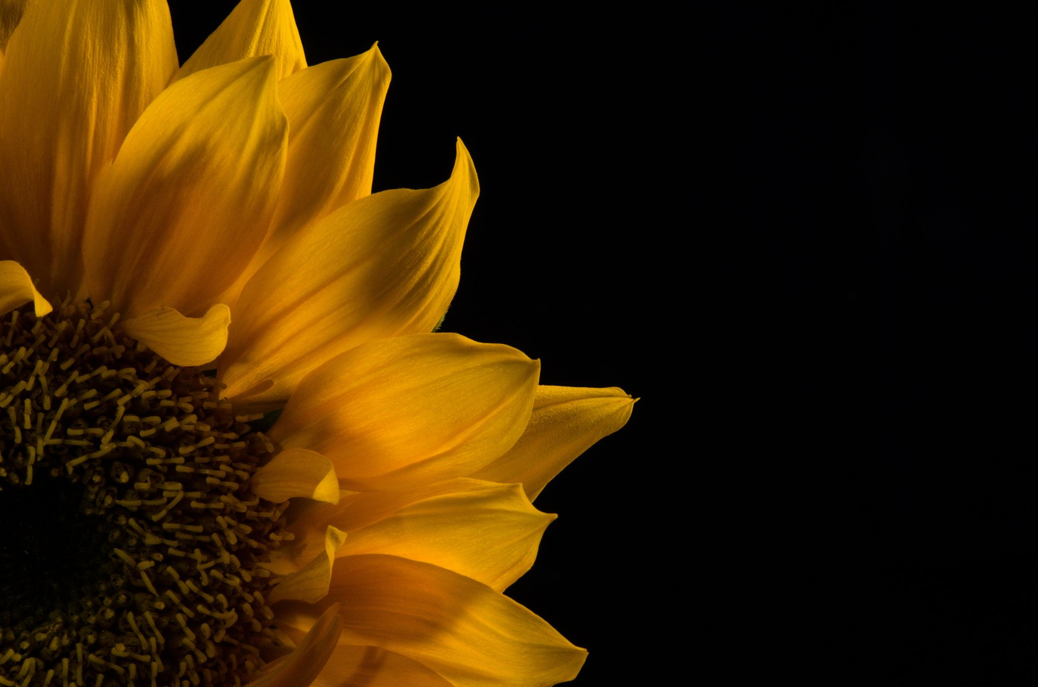 Sunflower in Corner by PI Photography and Fine Art - Delaware Photographer on 500px