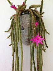 Jardinera jardinera de pared jardineras jardinera principal macetas para plantas macetas planta de cara   jardinera