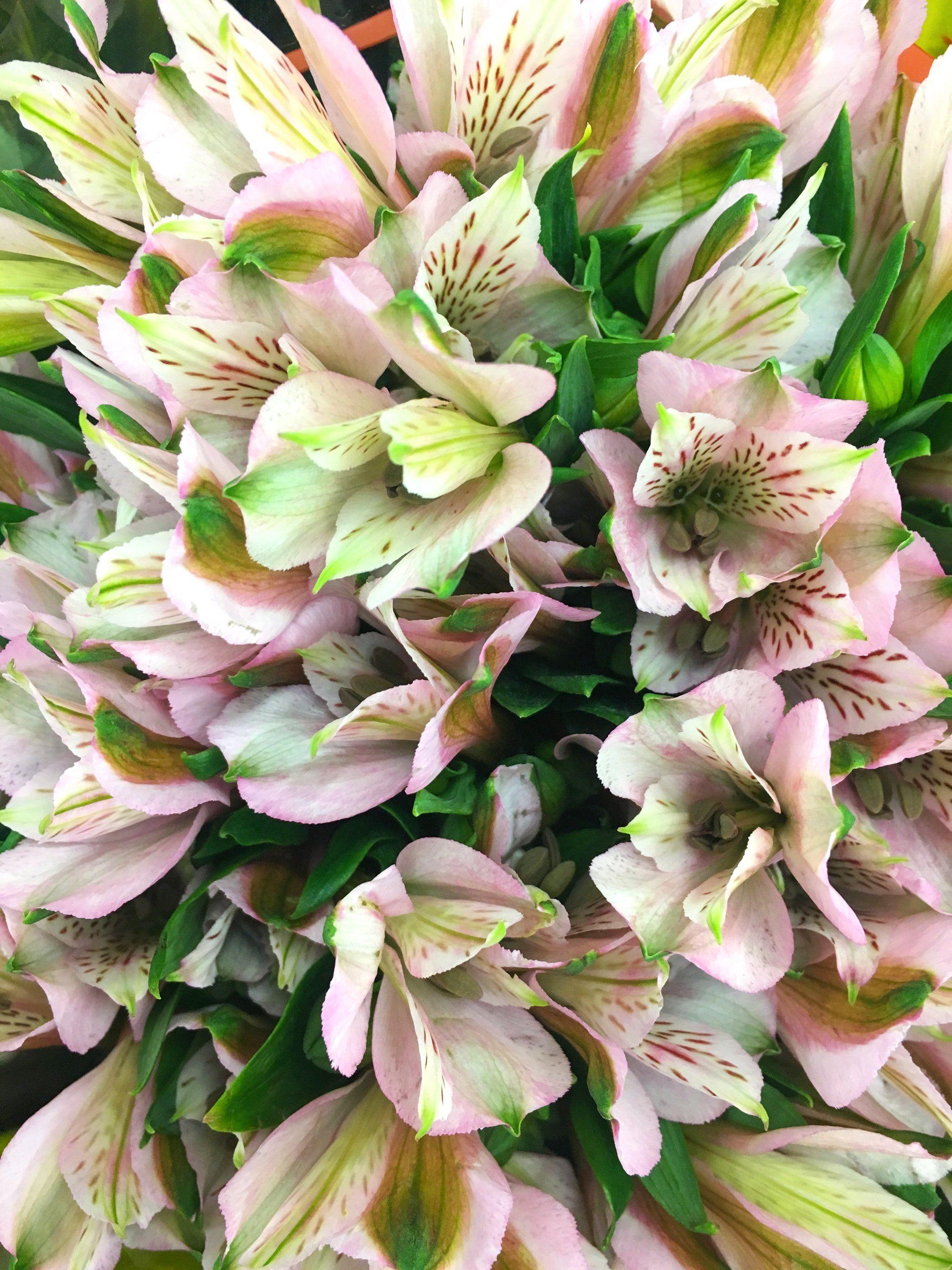 Alstroemeria Light Pink Diyflowers Diyweddingflowers Affordableflowers Weddingaffordable Doityo Alstroemeria Bouquet Alstroemeria Flower Bouquet Wedding