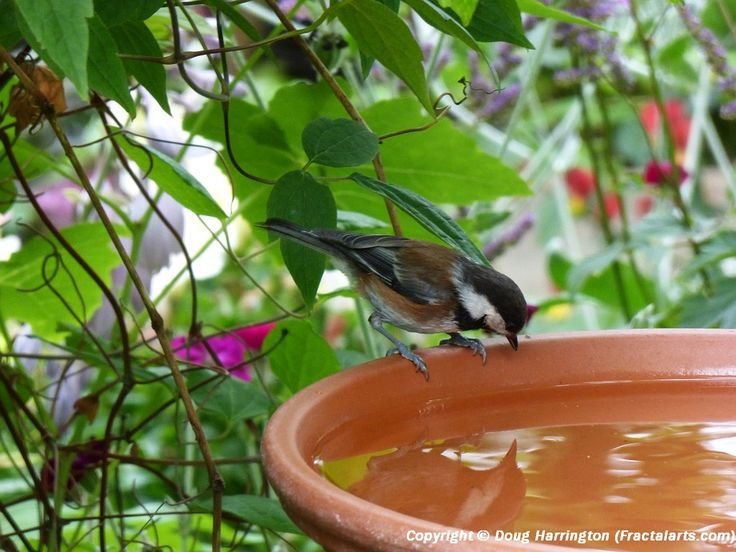 National Geographic's Backyard Bird Identifier - Backyard Bird Identifier Simply For The Birds - Tips, DIY Projects