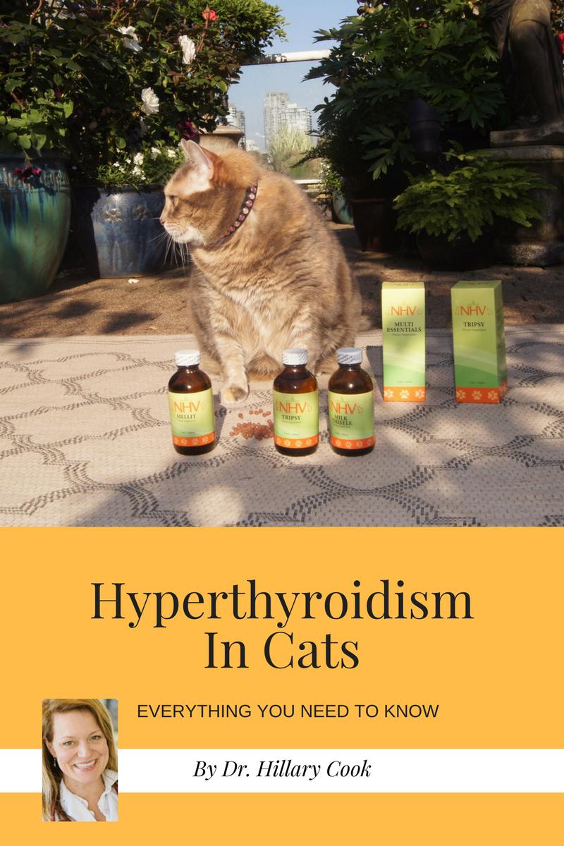 Vet Talk Hyperthyroidism in Cats Natural pet