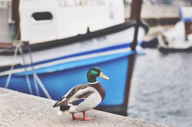 L'armadio del delitto - blog vintage e moda retro: Tao sul lago