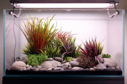 High end artificial aquascape for fancy goldfish for Fancy fish tanks