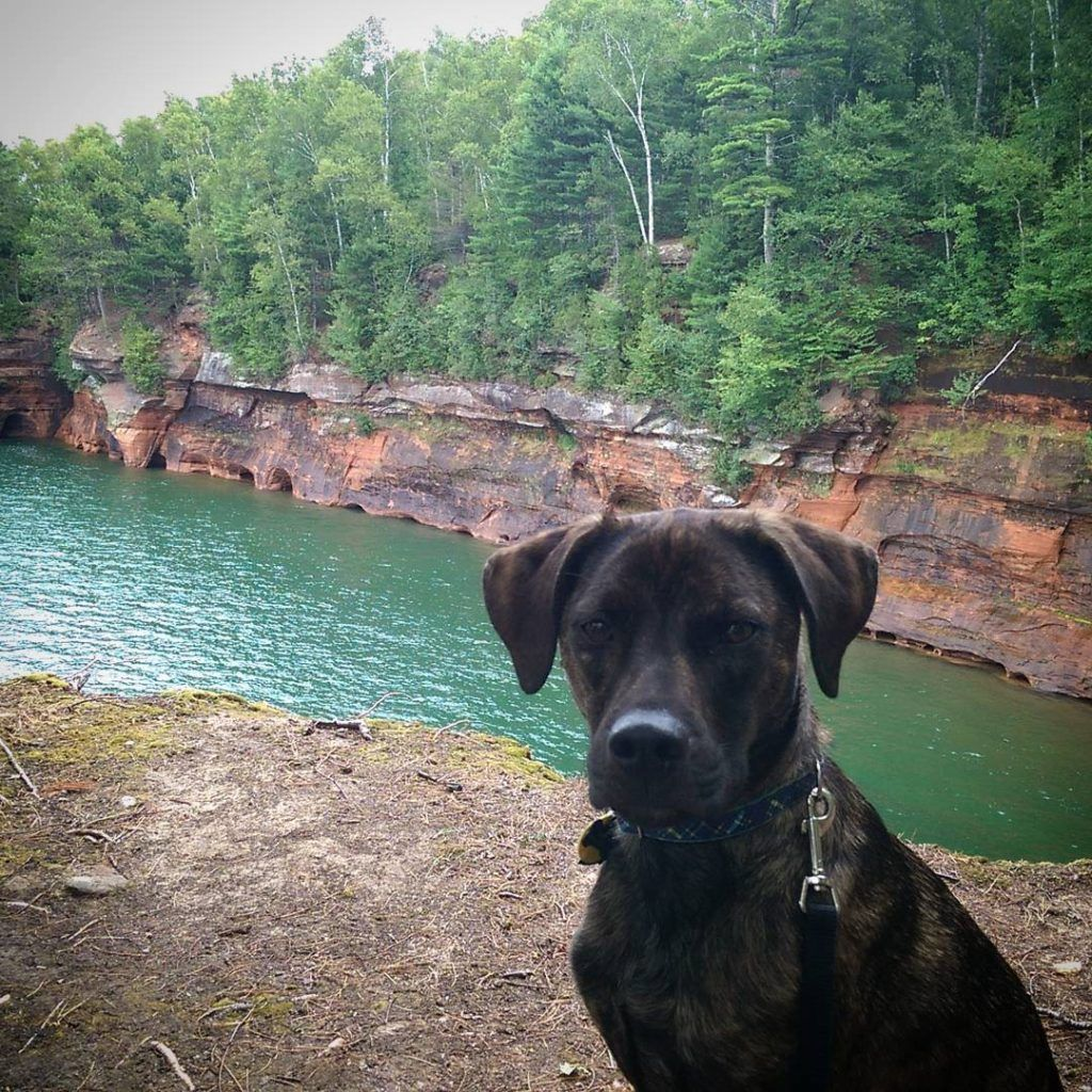 4 Dog Friendly Destinations In Wisconsin Road Trips Dog