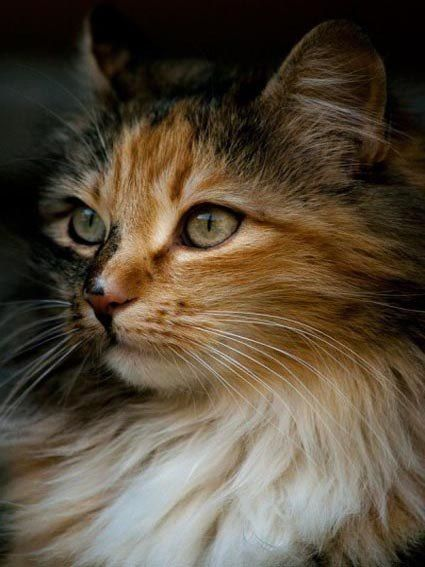Spottedfern Cute Cats Kittens Pretty Cats