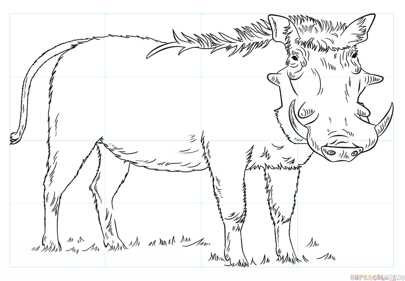 How To Draw A Warthog Step By Step Drawing Tutorials For Kids And Beginners Drawing Tutorial Step By Step Drawing Drawings