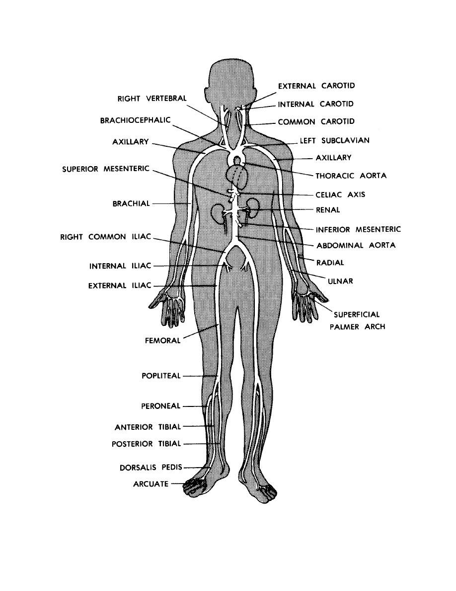 simple human anatomy diagram simple human anatomy diagram diagram simple human body anatomy simple human anatomy [ 918 x 1188 Pixel ]