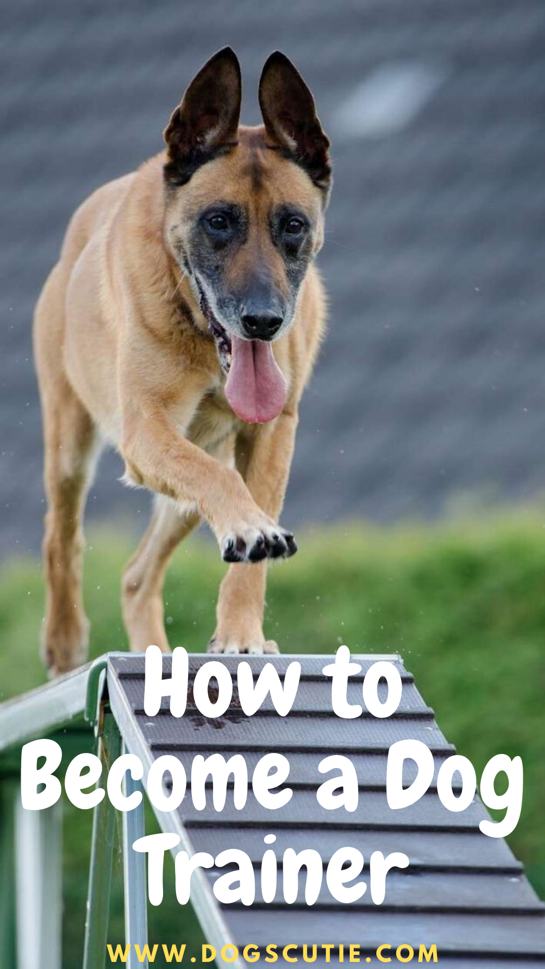 How To Become A Dog Trainer Become A Dog Trainer Dog Training School Dog Trainer
