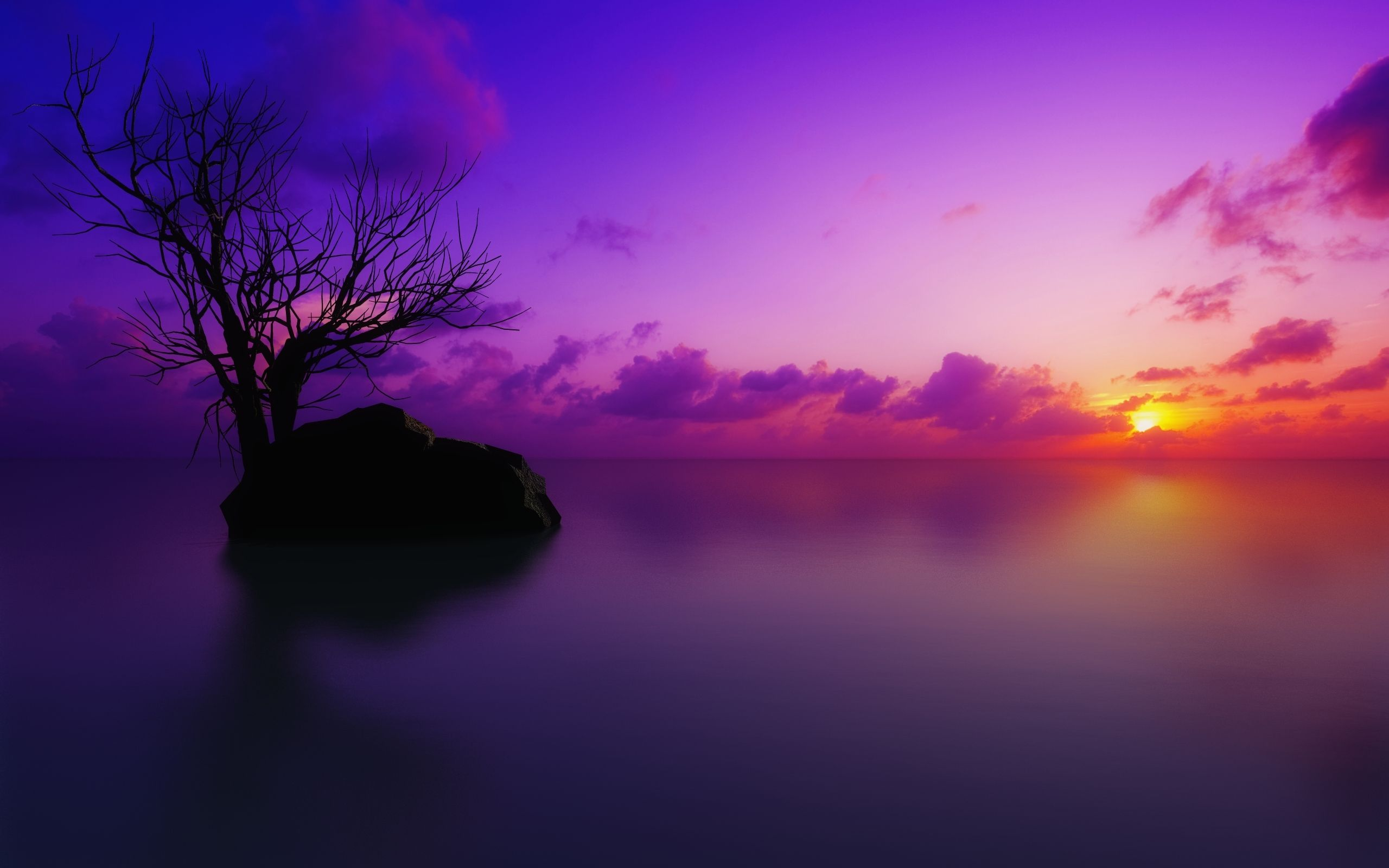 Wallpaper Dead Tree Picture Colorful Sunset Scenic Dead Trees The Sky Nature Wallpapers Sunset Images Purple Sunset Sunset Wallpaper