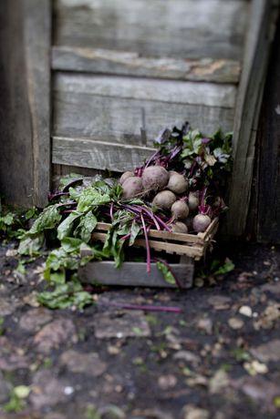 Maria Grossmann Styling + Fotografie - Food - Rote Bete
