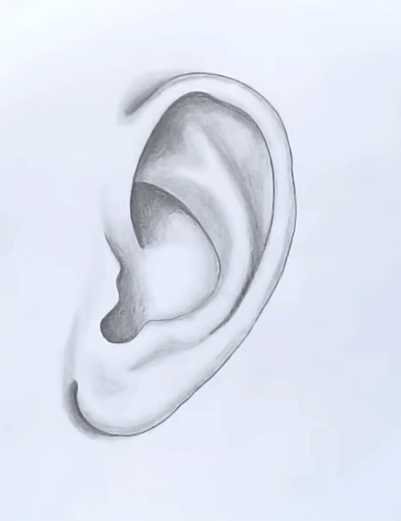 How To Draw Ears Step By Step For Beginners Hello Friends In This Blog Post I Will Provide Ear Draw In 2020 How To Draw Ears Drawing Tutorial Pencil Drawing Tutorials