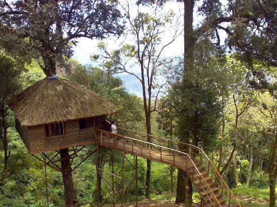 7 Amazing Houses Built Into Nature: -Nature Zone Resort (Munnar) -