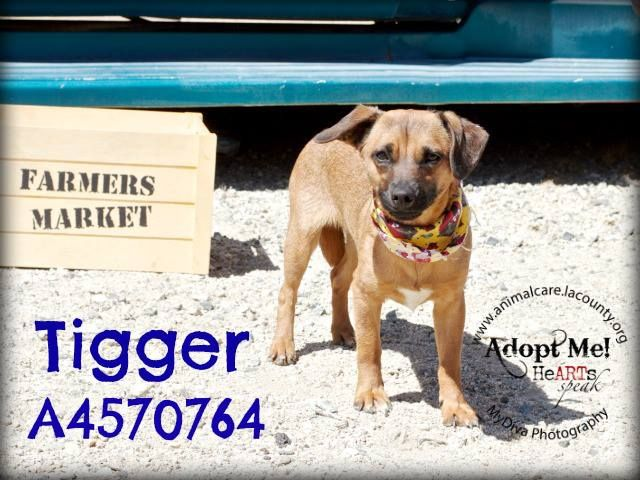 He Is In Lancaster Ca Animal Shelter A High Kill Shelter
