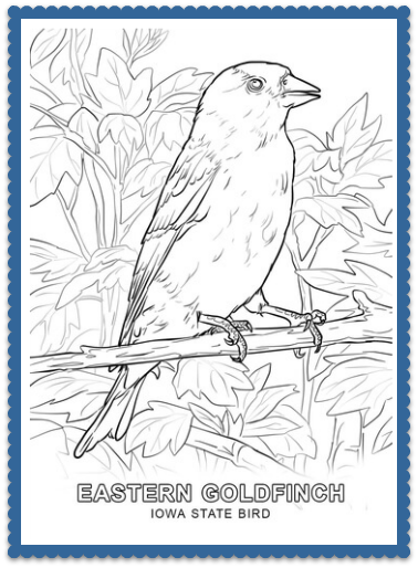 iowa state bird coloring page print or color online eastern goldfinch