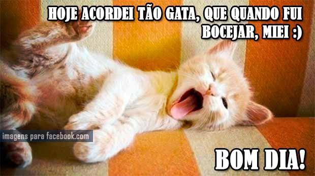 Bom Dia Cat: Hoje-acordei-tão-gata,-que-quando-fui-bocejar,-miei--Bom