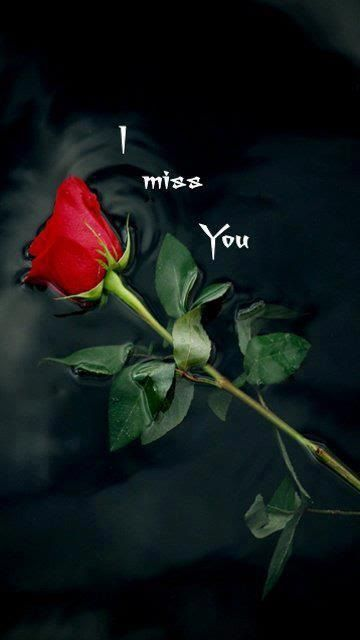 Goodmorning Dear Goodmorning My I Miss You Too Miss You