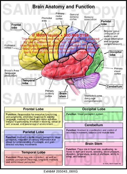 an overview of the different parts of the human brain At least three different classes of brain networks can be studied:  thus, bridging  the gap between structure and function, and.