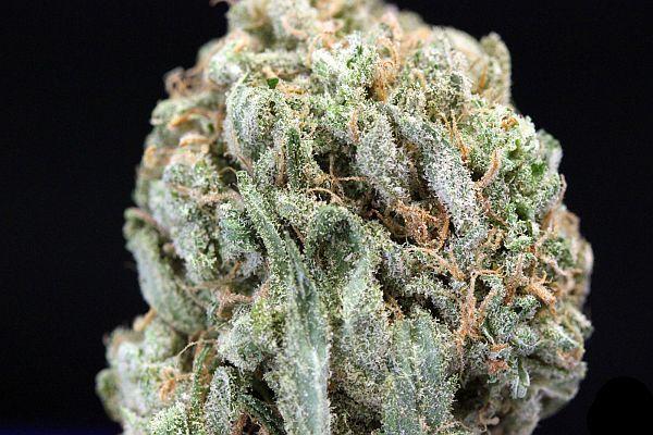 5 Best Marijuana Strains For Headache Relief