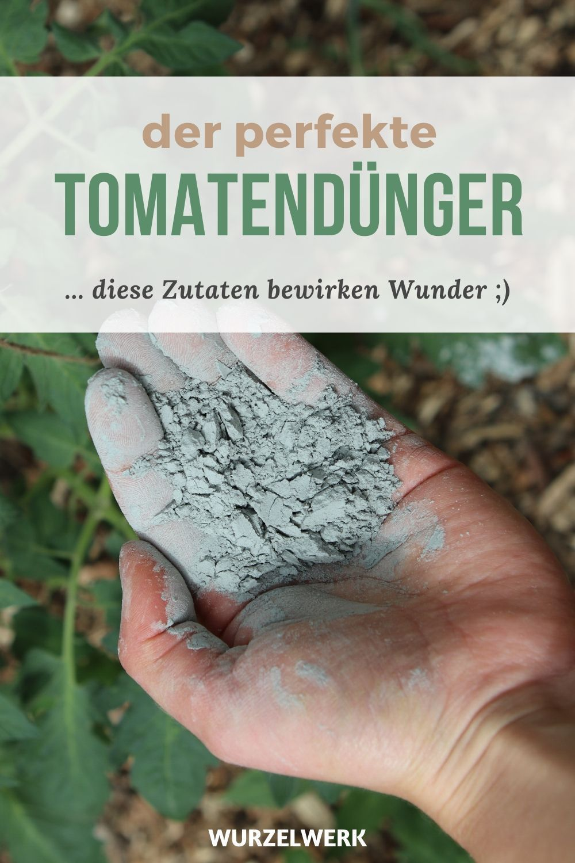 Tomaten Richtig Dungen Wann Wie Mit Welchen Dunger Wurzelwerk In 2020 Tomaten Garten Garten Anpflanzen Garten Bepflanzen