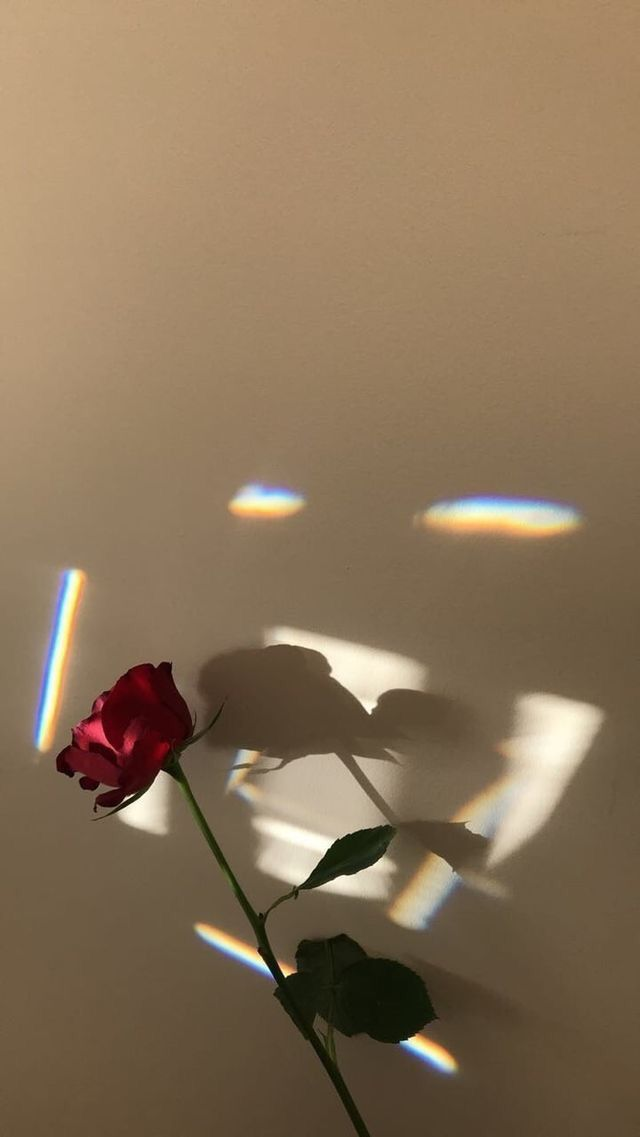 iphone aesthetic rose wallpaper