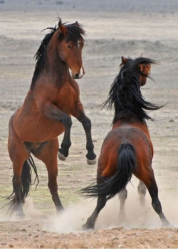 Exquisite Beauty おしゃれまとめの人気アイデア Pinterest Tracie Mikes 馬 動物 乗馬