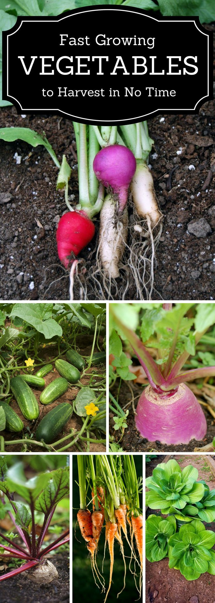 Top 10 Fast Growing Vegetables You Can Harvest In No Time 400 x 300