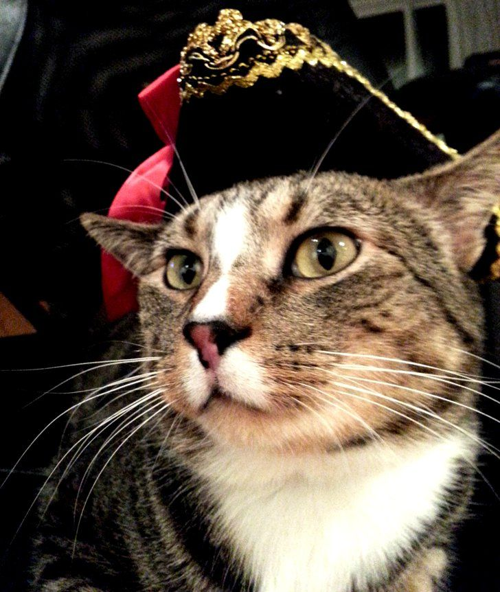 Pin for Later: Your Comprehensive Guide to Dog and Cat Halloween Costumes Pirate